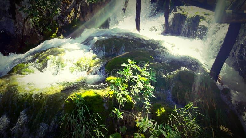 Воды леса стоковые фотографии rf