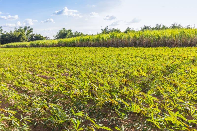 Вращение урожая стоковая фотография