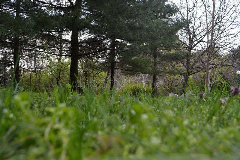 Время весны в парке города стоковая фотография rf