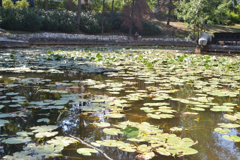 Время весны для лягушек и листьев стоковая фотография rf
