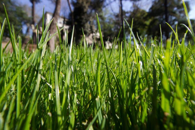 Время весны для Стамбула апреля 2019, травянистого дня поля, ярких и солнечного стоковое фото rf
