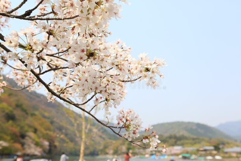 Время весны на Arashiyama, Японии стоковые изображения