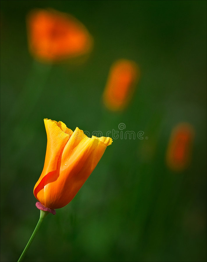 время весны Стоковые Изображения