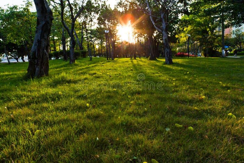 Время захода солнца на парке города стоковое фото rf