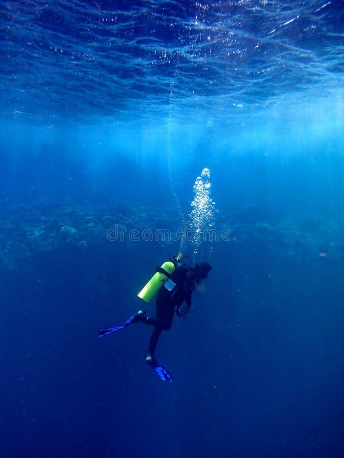 Время исследовать подводный мир ` s стоковые изображения rf