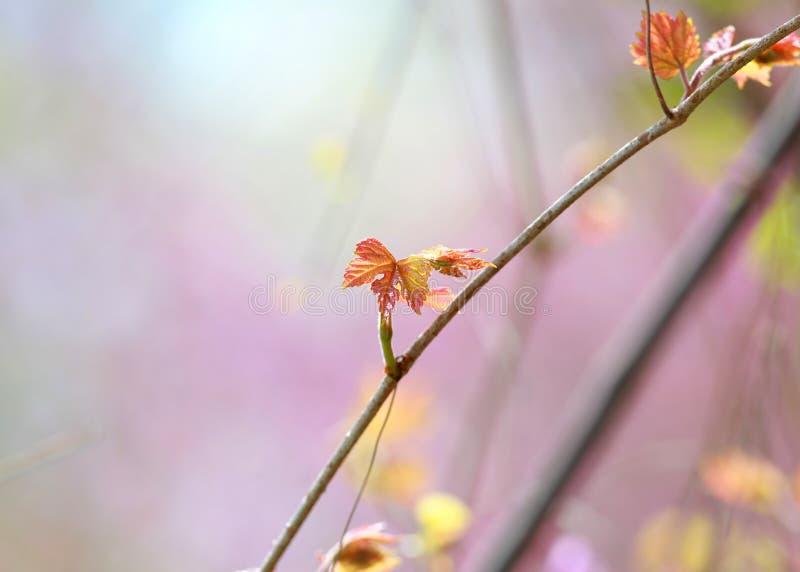 время листьев весной стоковое фото
