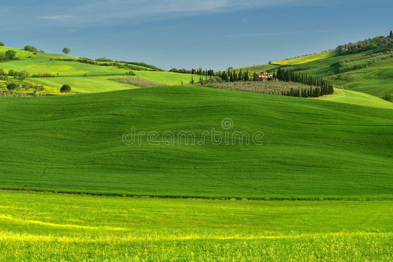 Время ландшафта Тосканы весной с зеленым полем стоковая фотография rf
