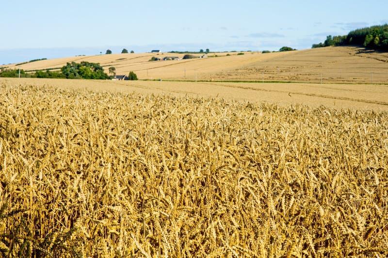 время ландшафта хлебоуборки стоковое фото rf