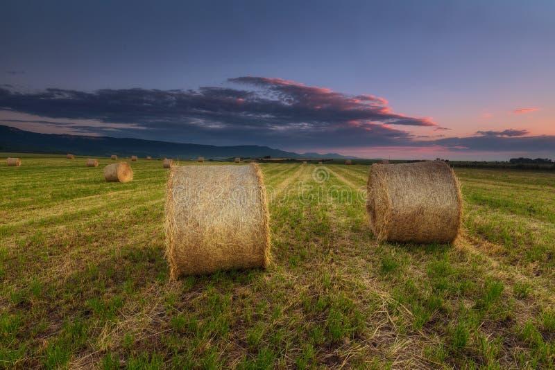 Время сбора, пачки в поле в Alava стоковая фотография