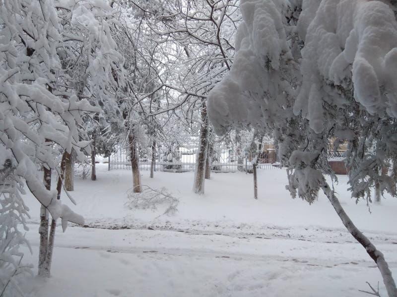 Время снежка стоковое изображение