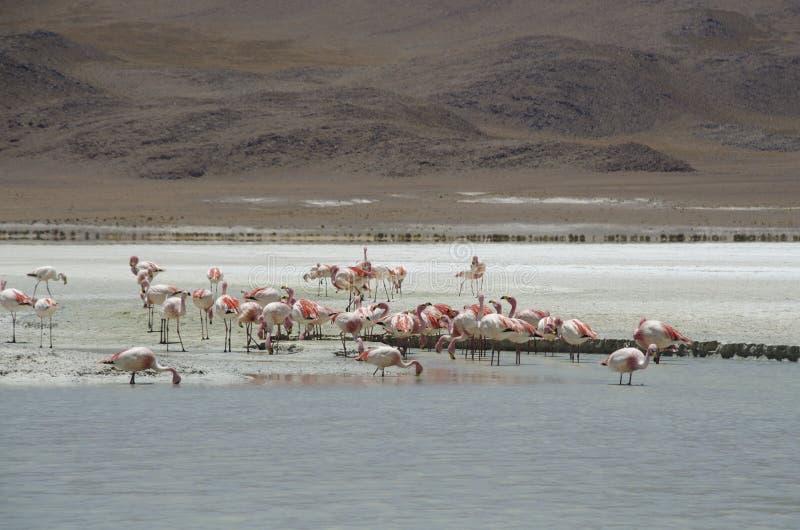 Время фламинго стоковые изображения rf