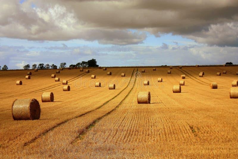 время хлебоуборки стоковое фото