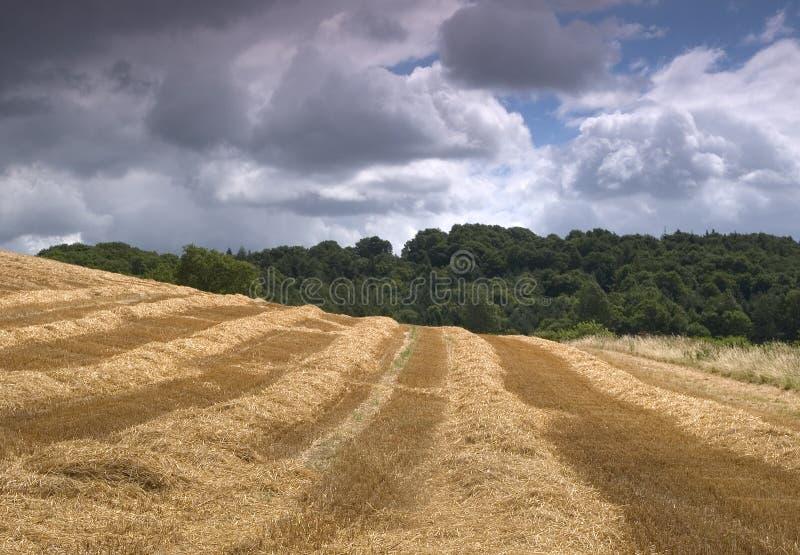 время хлебоуборки стоковое изображение rf