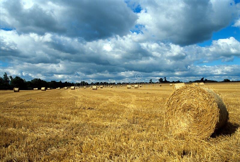 время хлебоуборки стоковое фото rf