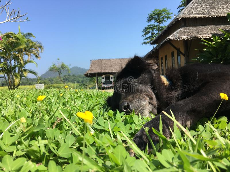 Время drem собаки спать стоковые фото