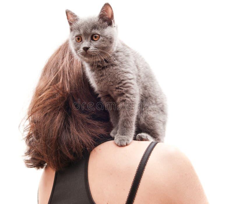 интернет-магазине цветное картинки высокого разрешения котик на плече сидит этого происходило