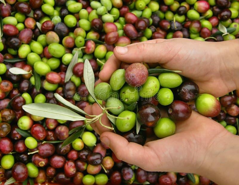 вручает оливки стоковое изображение rf