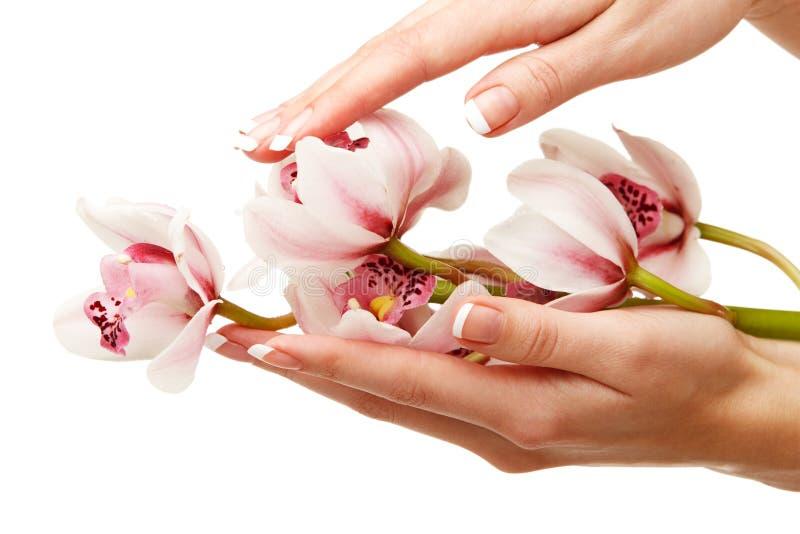 вручает орхидею стоковая фотография
