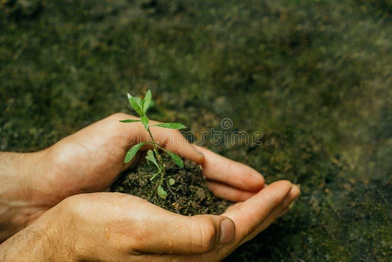 Вручает саженцу почву стоковое фото rf