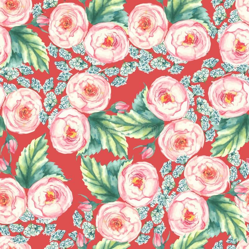 Вручите вычерченной акварели флористическую безшовную картину с нежными розовыми розами внутри на красной предпосылке иллюстрация вектора