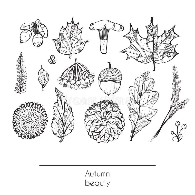 Вручите вычерченной осени красивый комплект листьев, цветков, ветвей, гриба и ягод, изолированных на белой предпосылке черная бел иллюстрация вектора