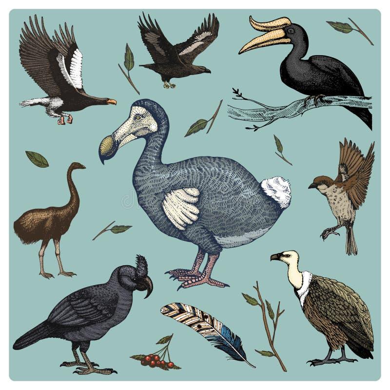 Вручите вычерченному вектору реалистическую птицу, стиль эскиза графический, комплект отечественного хищники griffon и обширн-пре иллюстрация штока