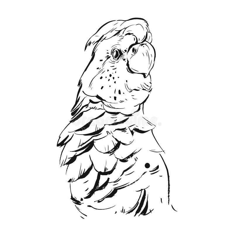 Вручите вычерченному конспекту вектора графические чернила реалистическая тропическая иллюстрация попугая изолированная на белой  иллюстрация вектора
