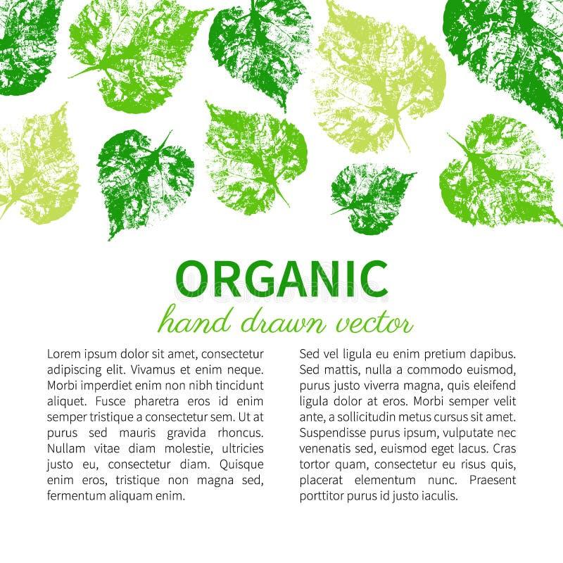 Вручите вычерченную векторную графику гравируя зеленые листья изолированные на белизне, лист отпечатка штемпеля, карточки, знамен иллюстрация штока