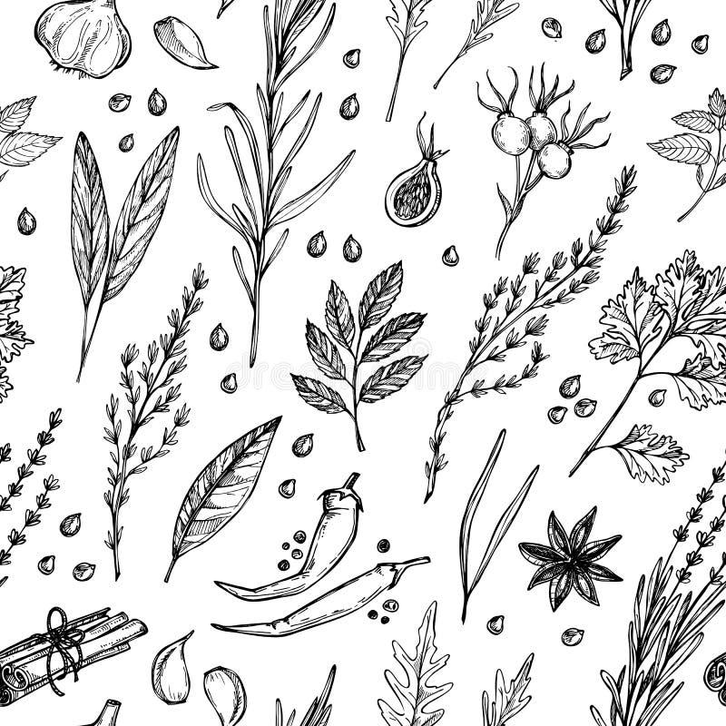 Вручите вычерченную винтажную предпосылку - травы и специи Seamles вектора иллюстрация вектора