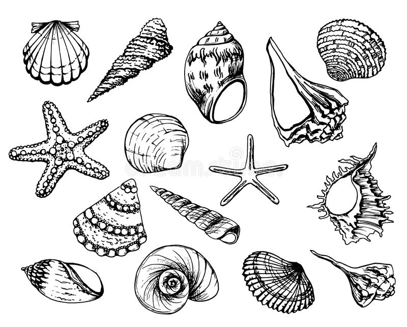 Вручите вычерченные иллюстрации вектора - собрание seashells Комплект морского пехотинца Улучшите для приглашений, поздравительны иллюстрация вектора