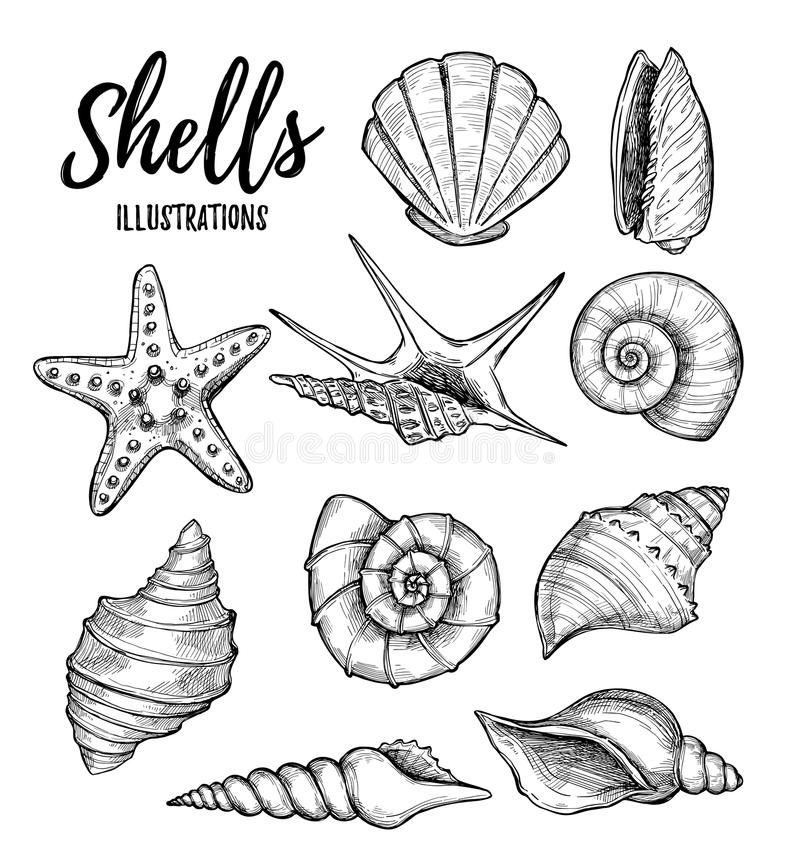 Вручите вычерченные иллюстрации вектора - собрание seashells mari