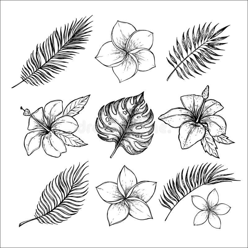 Вручите вычерченные иллюстрации вектора - тропические цветки и отруби ладони иллюстрация штока