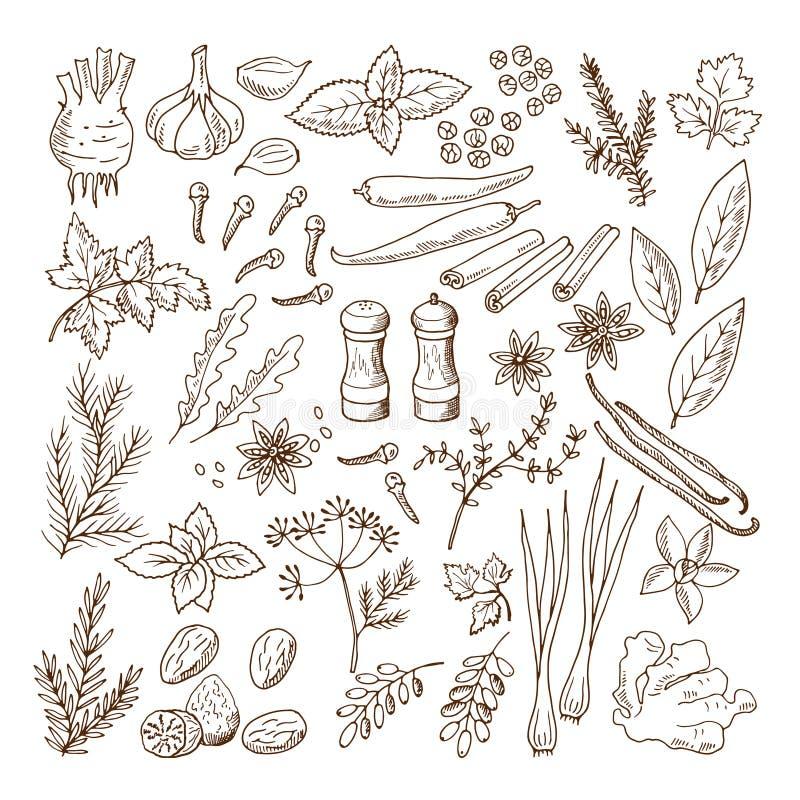 Вручите вычерченные иллюстрации различных трав и специй Изолят вектора установленный изображениями на белизне иллюстрация вектора