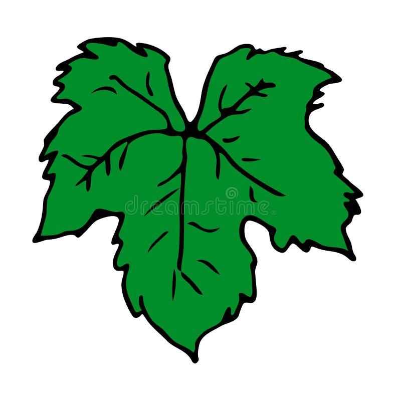 Вручите вычерченные лист зеленого цвета вектора виноградины или плюща Изолированный предмет иллюстрация вектора