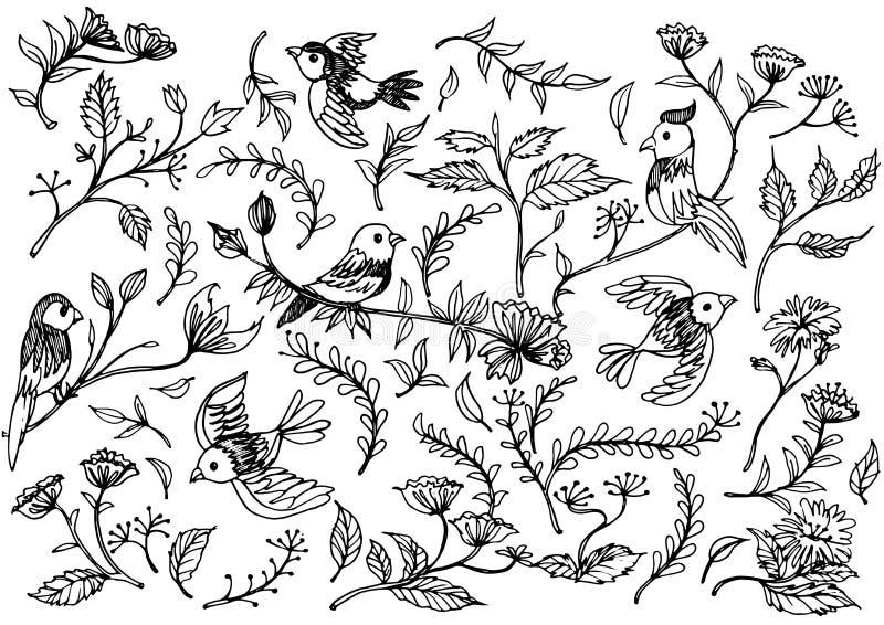Вручите вычерченные флористические орнаменты с цветками и птицами бесплатная иллюстрация