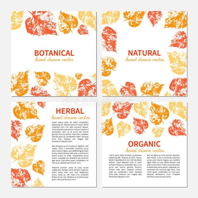 Вручите вычерченный апельсин векторной графики, листья желтого цвета изолированные на белизне, комплекте 4 карточек eco квадратны бесплатная иллюстрация