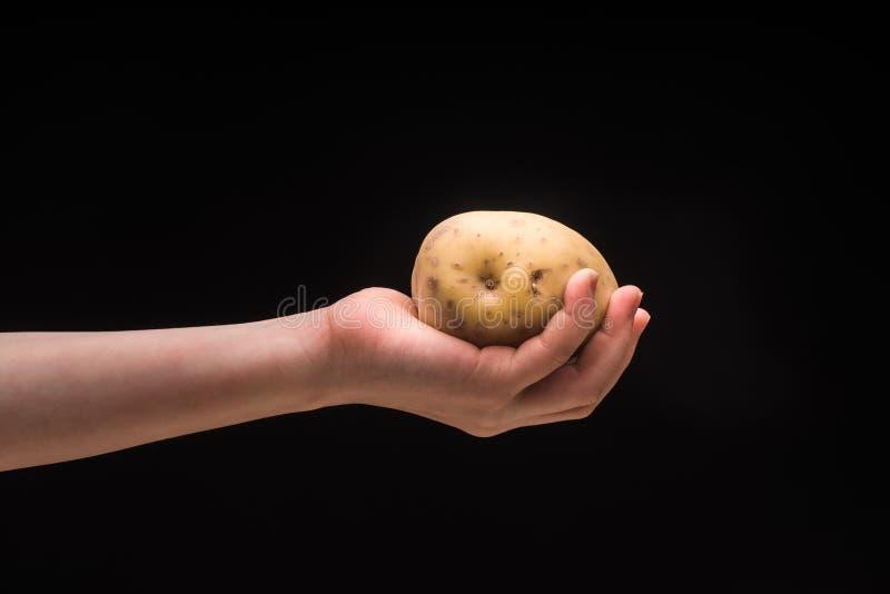 Вручите держать картошку изолированный на черной предпосылке, съемке студии стоковые фотографии rf