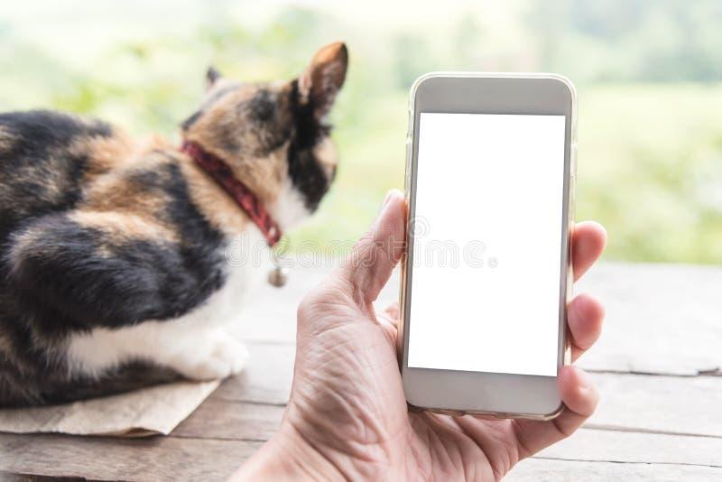 Вручите держать умный телефон с пустым белым экраном для текста и ca стоковые фото