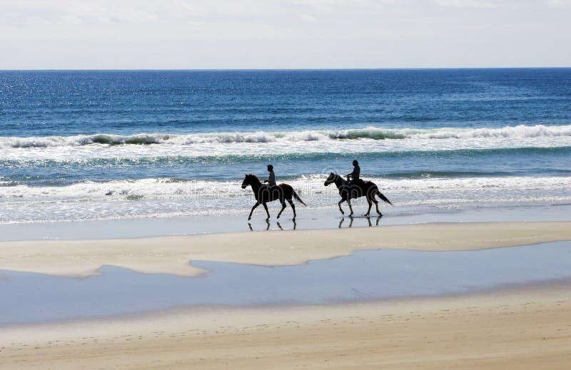 всадники лошади стоковые изображения rf