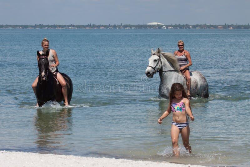 Всадники спины лошади пляжа с маленькой девочкой стоковое фото rf