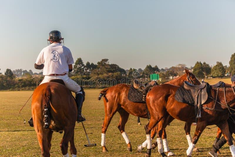 Всадник поло изменяет действие игры лошади стоковая фотография rf