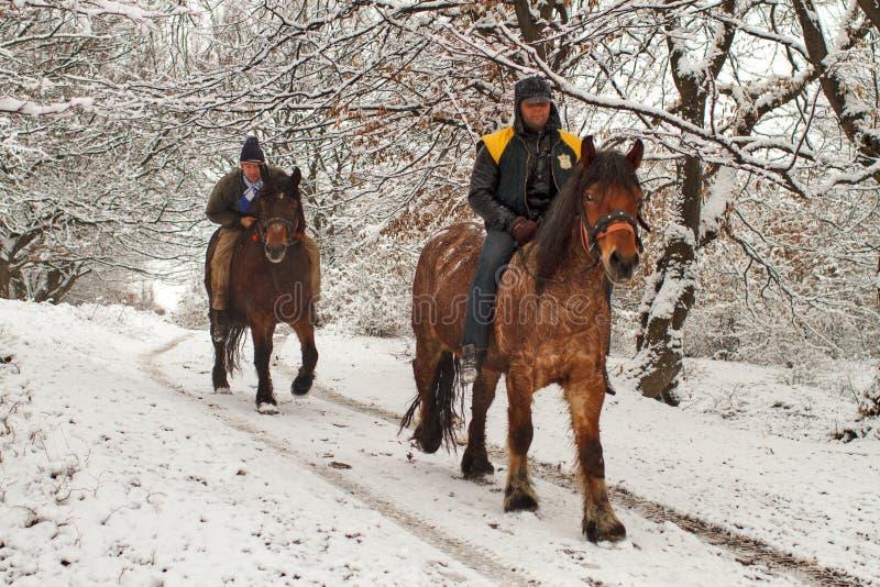 Всадники лошади в лесе стоковые изображения