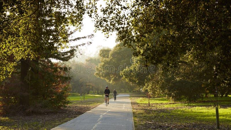 Всадник горного велосипеда в парке стоковая фотография