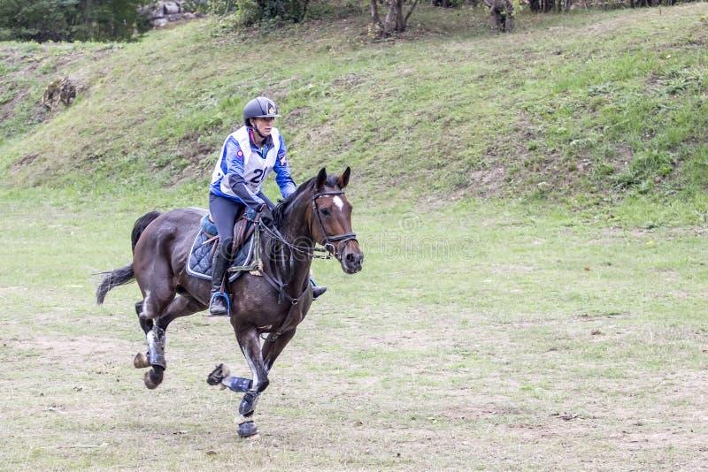Всадник и лошадь стоковое фото rf