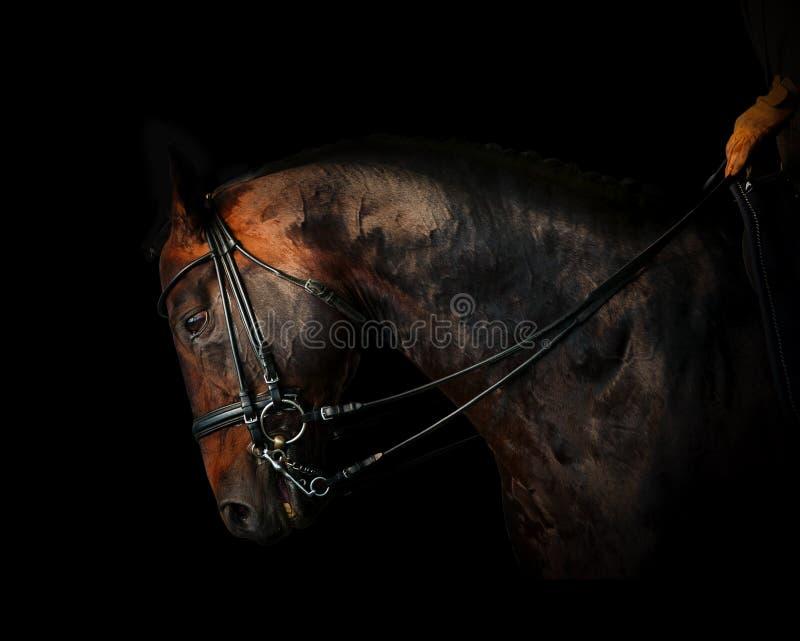 Всадник на лошади в темноте стоковые изображения