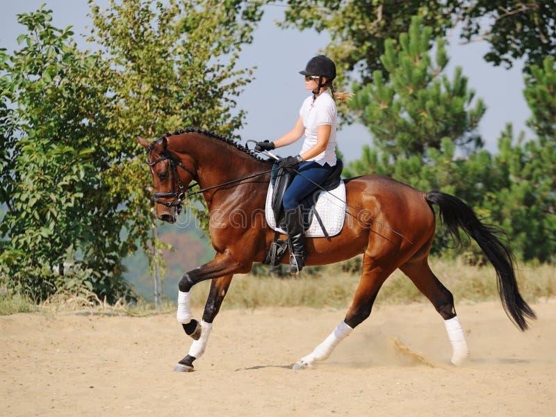 Всадник на лошади dressage залива, идя галоп стоковое фото