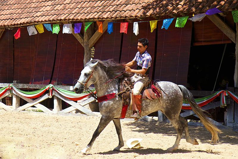 Всадник лошади в Мексике, X-Caret стоковое изображение