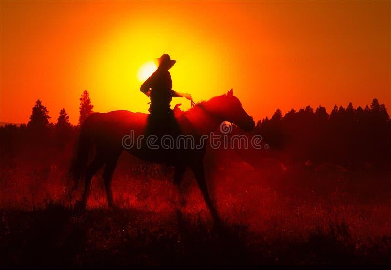 Всадник лошади захода солнца стоковая фотография rf