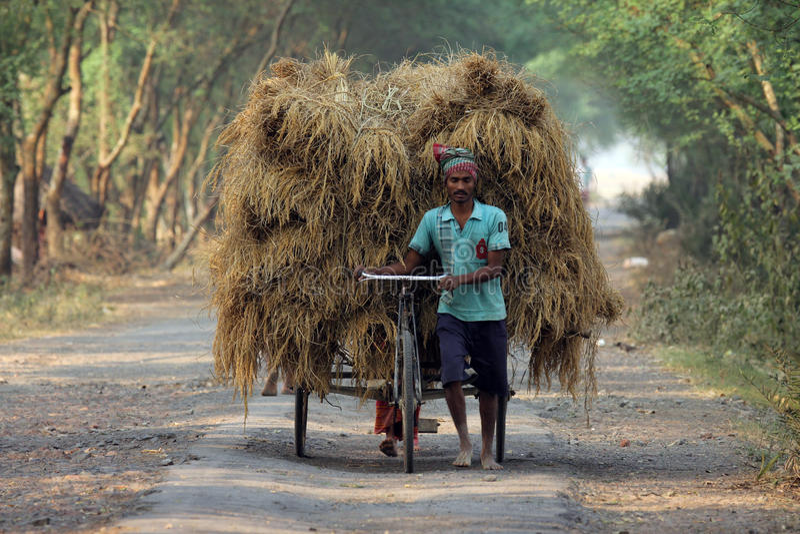 Всадник рикши транспортирует рис от дома фермы стоковые изображения