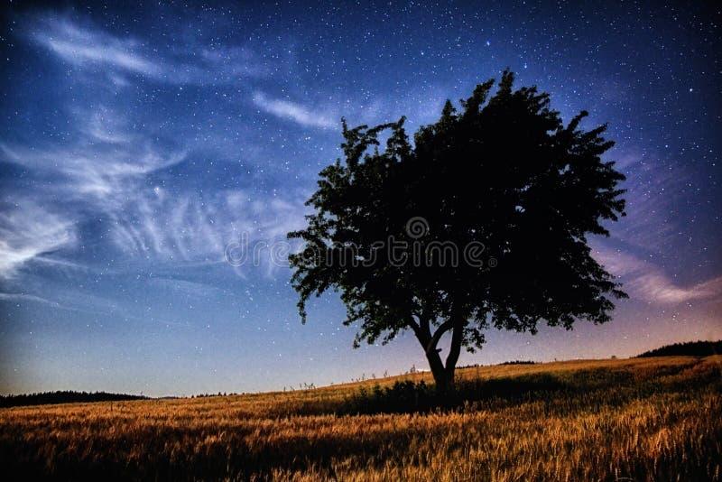 Вселенная и дерево стоковые фотографии rf